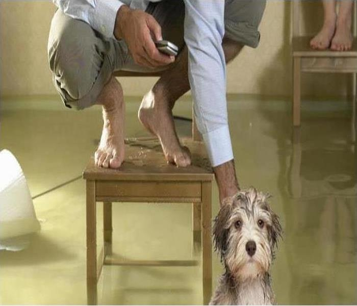 person on chair above standing water petting dog