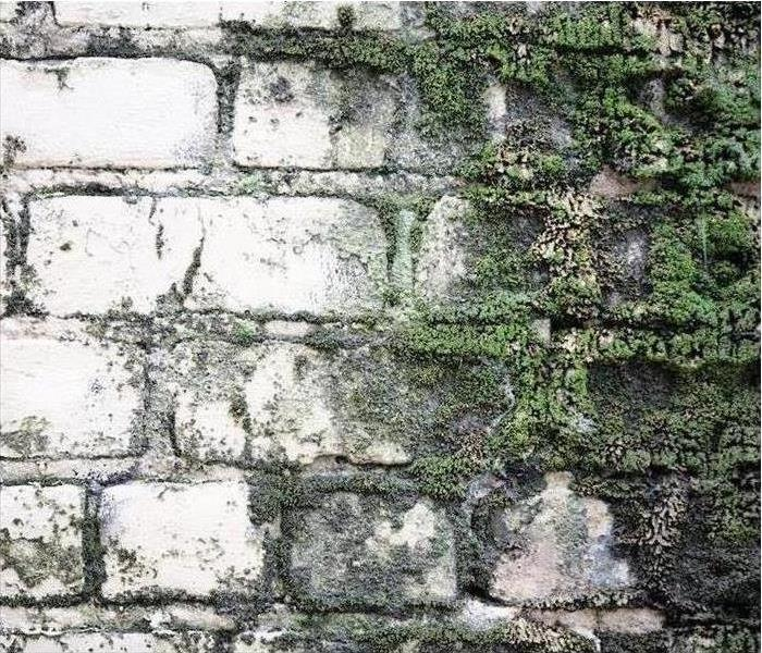 a brick wall with mold
